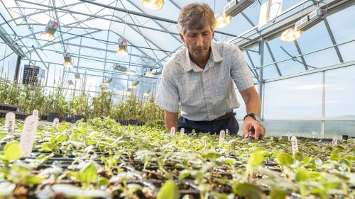 A man checks on young plants in a greenhouse
