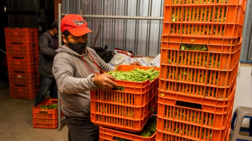 A worker holds a crate of vegetables.